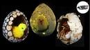 3 pomysły z czego zrobić jaja na balonie 3 EGGS MADE OF BALLOON Pomysły plastyczne dla każdego
