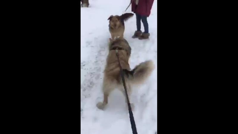 Рик и Альма на прогулке