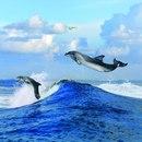 Марка нитей.  Теги. небо. море.  Гамма, 40 цветов. волна. чайка.  1. дельфин.  Автор.