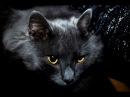A cat Murchik is a hypnotist/Кот Мурчик - гипнотизер