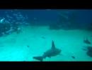 Shark Eilat