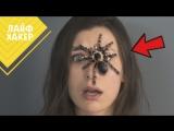 4 причины того, что мы боимся пауков