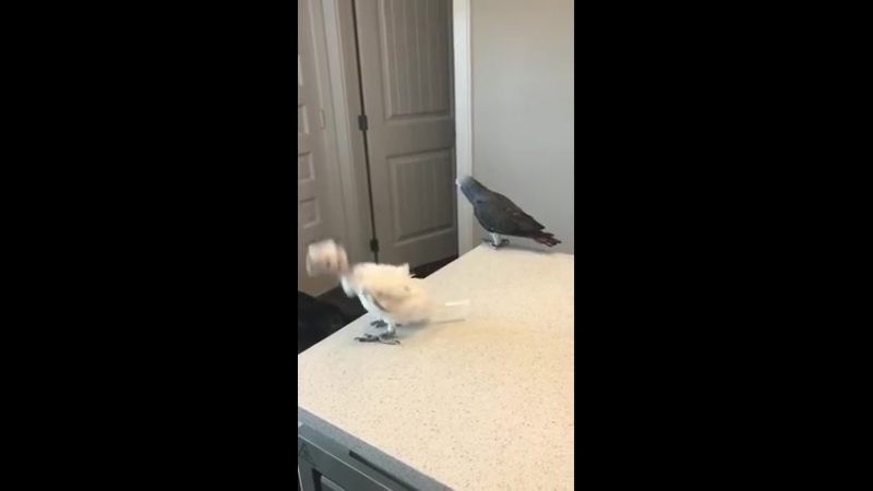 Ну и криповые птенцы у попугаев..