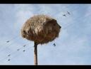 Кажется, что просто стог сена висит на столбе… Но истинное назначение данного предмета удивляет!