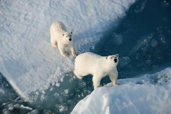 В чем Россия первая: организации туров на Северный полюс  сколько это стоит