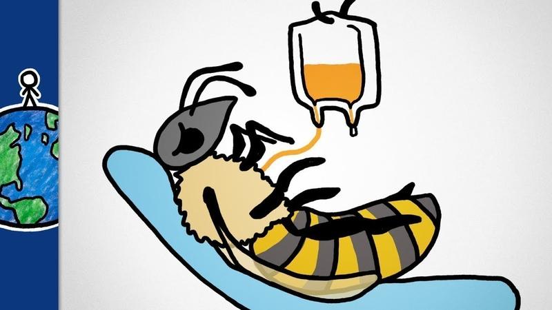 Секретное оружие, которое может помочь спасти пчёл