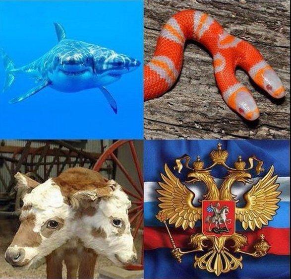 Россия несет особую ответственность, - Столтенберг о росте числа погибших в боях на Донбассе - Цензор.НЕТ 9207