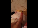 Ламповая няша