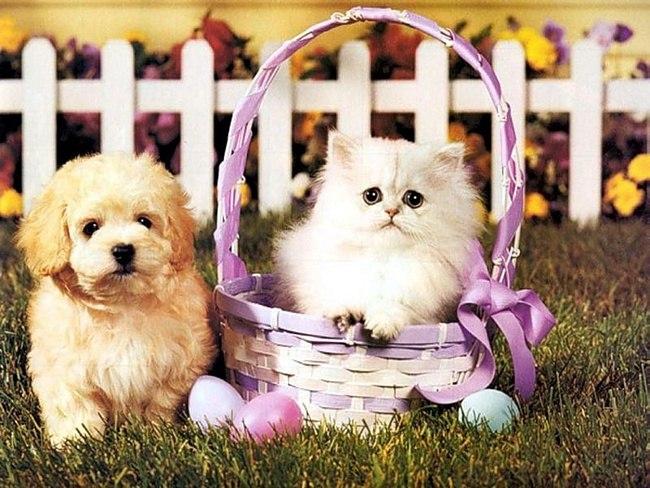 Картинки с котятами и щенками милые, для вставки