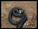 Про укусы ядовитых змей