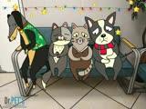 Гастроскопия кошек и собак