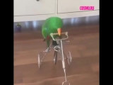 Попугай катается на велосипеде