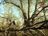 BBC Мир природы. Тысячелетний Дуб