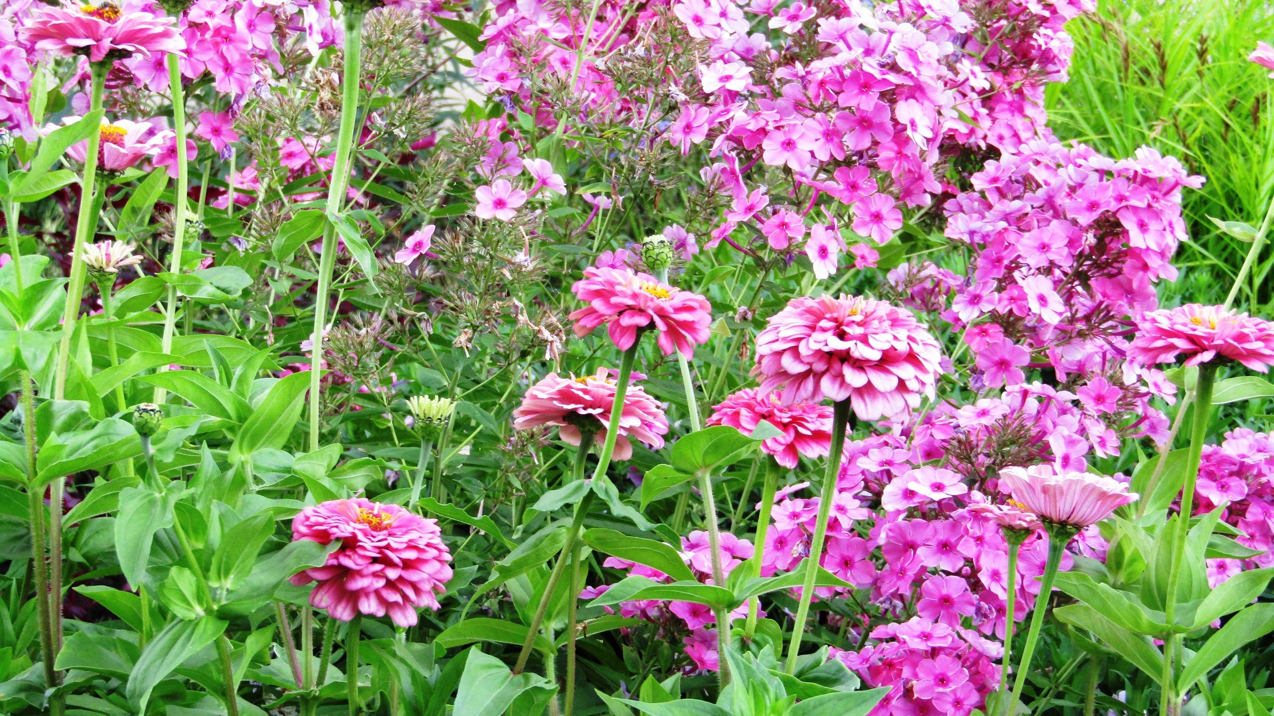 Ароматы и цвета ботанического сада в Праге здесь, ботанический, только, очень, растений, 9am–5pm, Моргану, можно, нужно, деревья, виноградники, Тройским, между, дальше, ботанического, впору, магазин, растения, видов, около