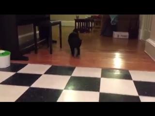 Самое любимое занятие кошки