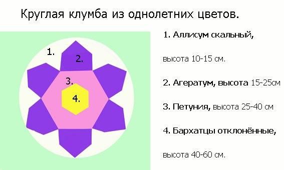 Схемы клумб из однолетников