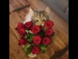 florist_ru___BlnN9B5FAQ9___.mp4