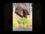 Не будите русского медведя! - авторская песня Александра Залялиева ©