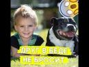 Собака спасла жизнь мальчику