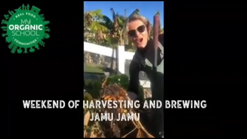 Danielle's Cormack Instagram /Wonderful weekend harvesting and brewing JAMU JAMU at the My Organic School farm.