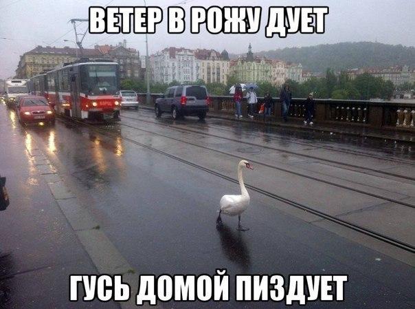 Кирилл Бадаев | Сергиев Посад