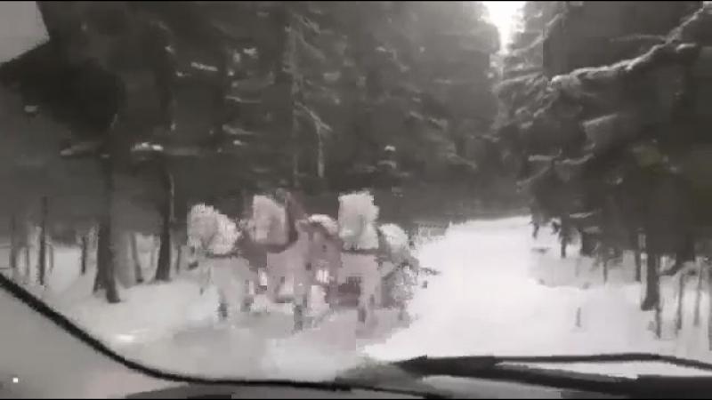 А ты не верил Всем кто не верит в Деда Мороза Он уже в пути