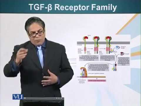 TGF B Receptor Family Cell Biology Lecture 117
