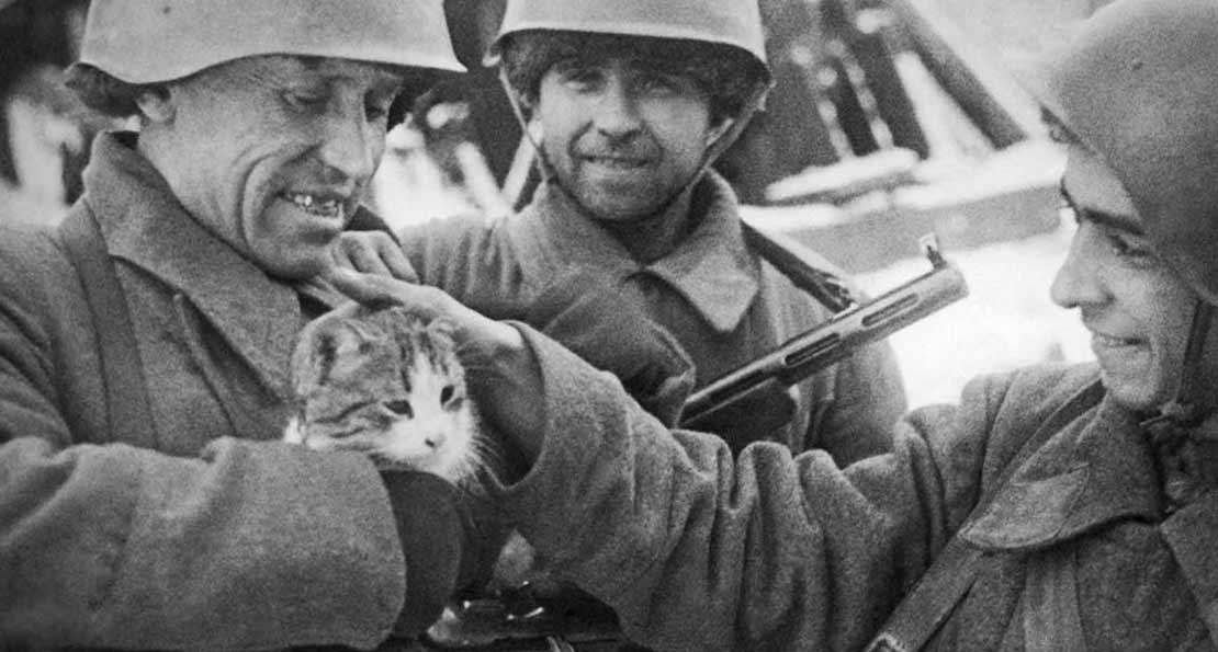 Кошки против крысы