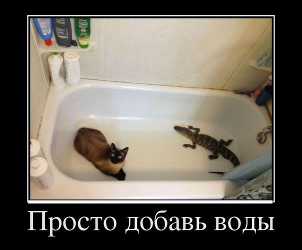https://pp.userapi.com/c620021/v620021651/155c0/Lky-E8X1bvE.jpg