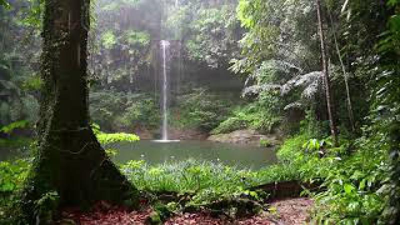 Som de chuva e Animais na Floresta para Dormir e Relaxar