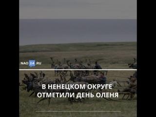 Главные новости Ненецкого округа за неделю 03.08.2018