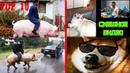 Смешное видео про животных / ТОП 10