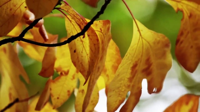 Derek Nigell - Autumn Swell