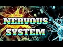 [Human Body 39] NERVES AND THE NERVOUS SYSTEM fact - Yes this fact also makes me suprise