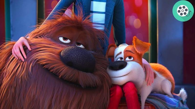 Ты снова дома Дюк. - Спасибо Макс. Финальная сцена. Тайная жизнь домашних животных (2016) год.