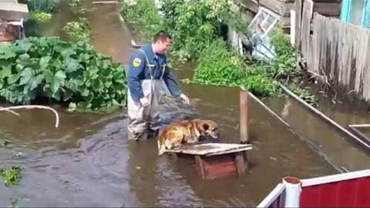 Затопленный посёлок Заречный в Чите 11 07 2018