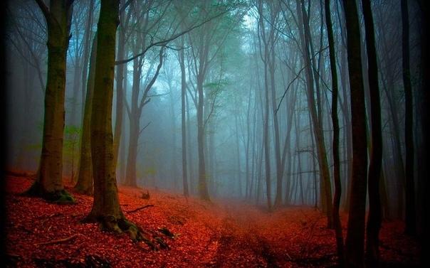 Черный лес, Шварцвальд, Германия Такое мистическое название место получило, благодаря особому виду сосновых деревьев, которые имеют очень темный цвет коры и растут максимально близко друг к