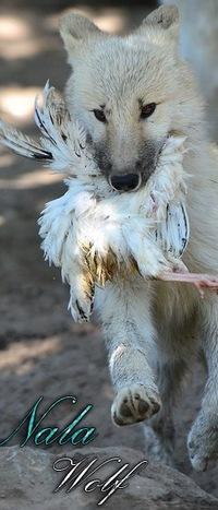 Nala Lioness, 6 апреля , Набережные Челны, id210224316