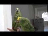 Зелёные попугаи веселые песенки поют