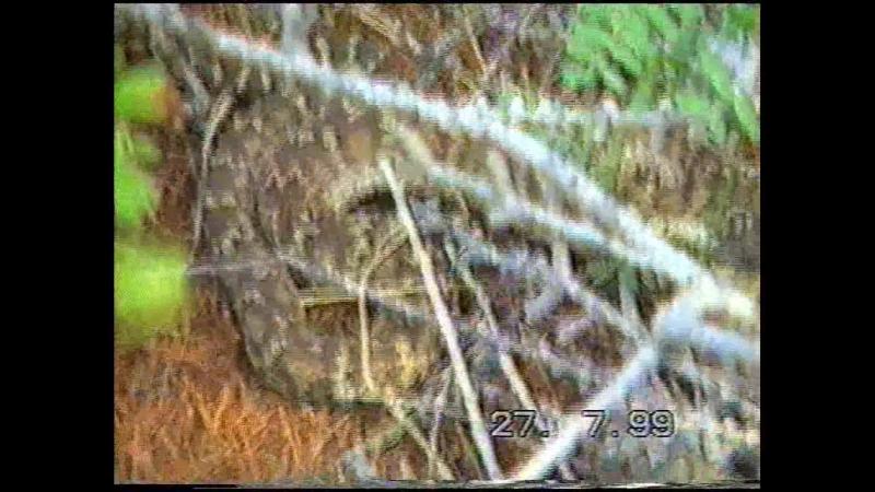 хозяева Сибири: змеи