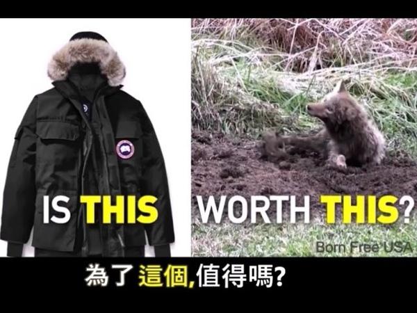 Canada Goose Animal Cruelty | Fur Cruelty | Down Cruelty