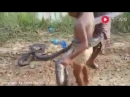 ппц жесть писюны ловят змей))