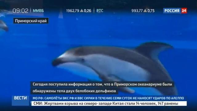 Новости на Россия 24 • Череда смертей в Приморском океанариуме: возбуждено дело о жестоком обращении с животными