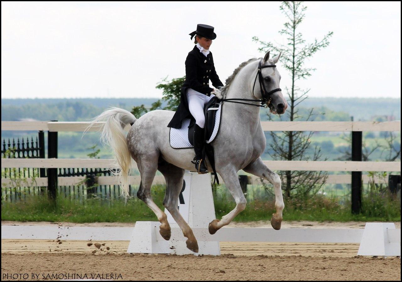 серая лошадь схема проезда база отдыха