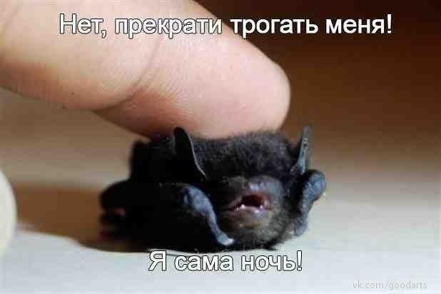 http://cs419731.vk.me/v419731769/5a7b/ZAc9rdoM-qY.jpg