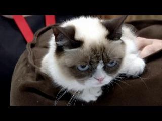 Любимец Интернета - сердитый котик станет звездой экрана