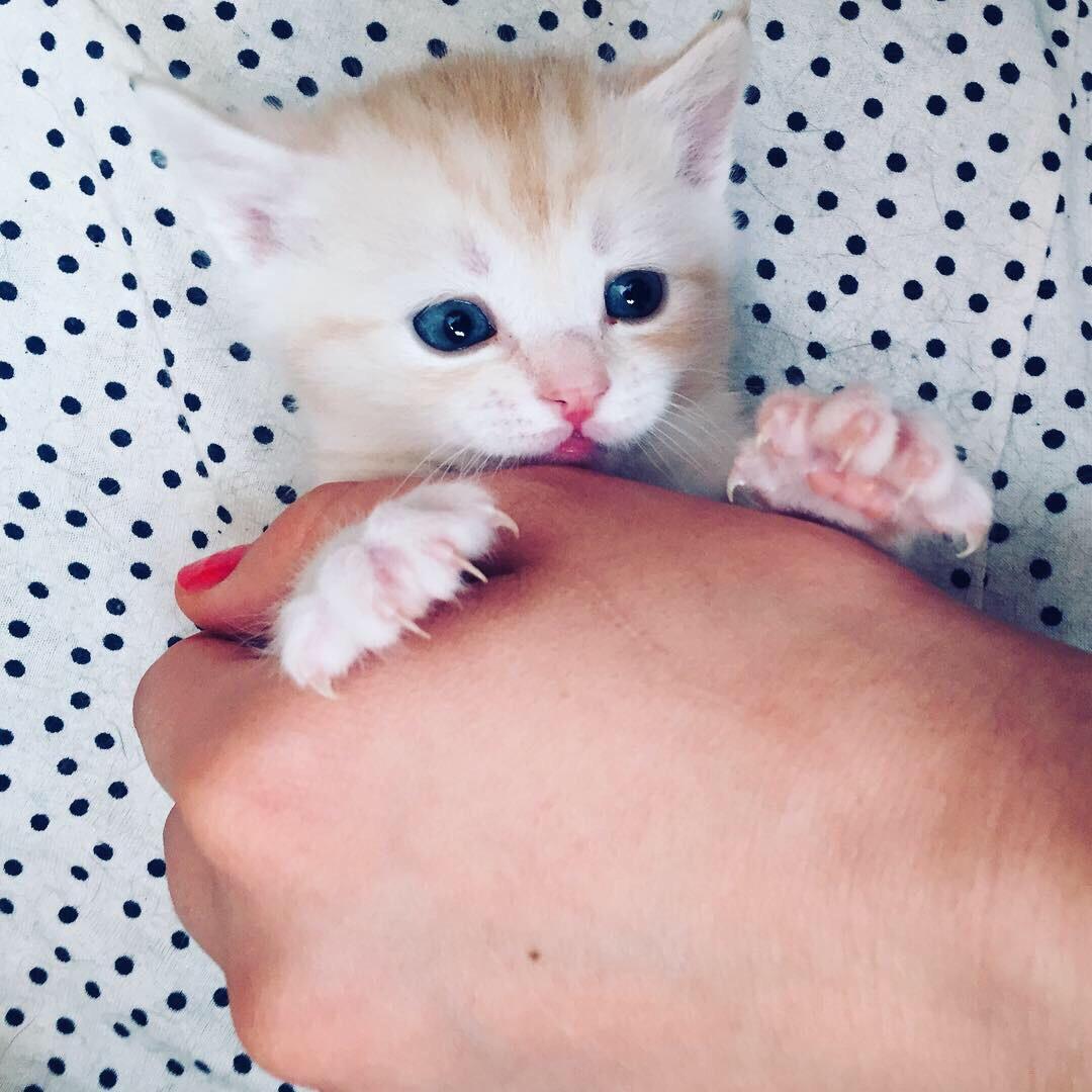 В ДОБРЫЕ РУКИ❤ 4 милых котёнка в поисках своих новых хозяев!