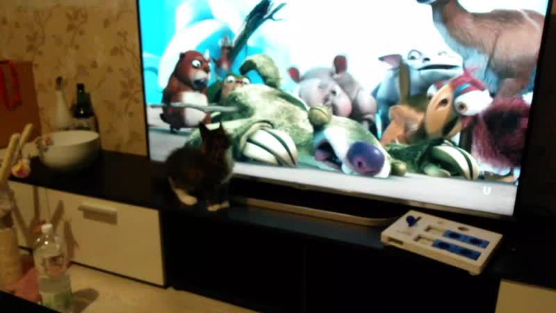 Котята тоже любят мультики