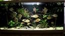 Интерактивный аквариумный туризм Сезон 4 Выпуск 14 Настоящая Амазония или нет