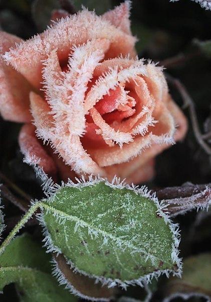 Цветы из проволоки и пряжи